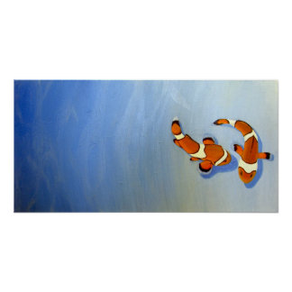 Bickering Clownfish Poster