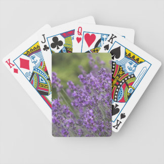 Bicycle Card Template - Customized Poker Deck