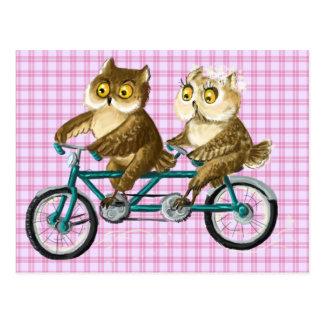 Bicycle owls postcard