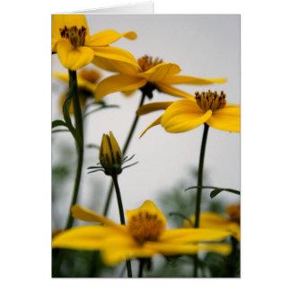 Bidens - Floral Photography Card