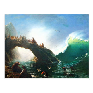 Bierstadt San Francisco Seals Postcard