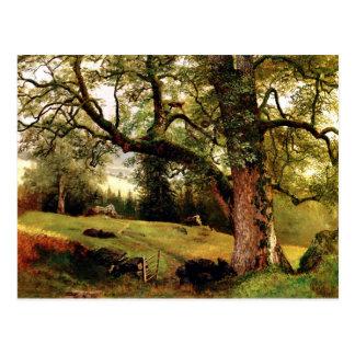 Bierstadt - un rastro a través de los árboles postales