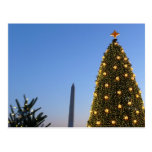 Big and Little Christmas Trees II Holiday in DC Postcard
