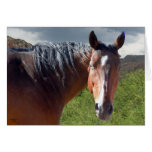 Big Bay American Quarter Horse - Blank Inside Greeting Cards