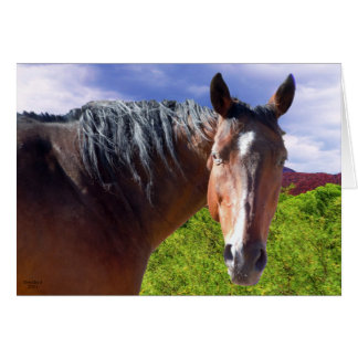 Big Bay American Quarter Horse - Blank Inside Card