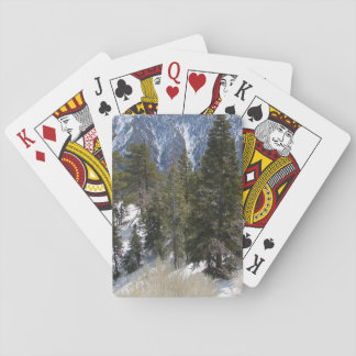 Big Bear Playing Deck of Cards