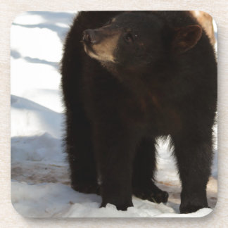 Big Bear Posavasos