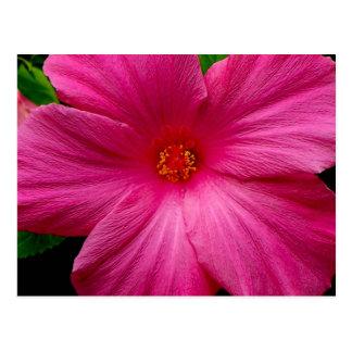 Big, Beautiful Pink Flower Postcard
