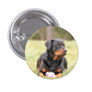 Big Beautiful Rottweiler Button