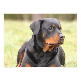 Big Beautiful Rottweiler Card