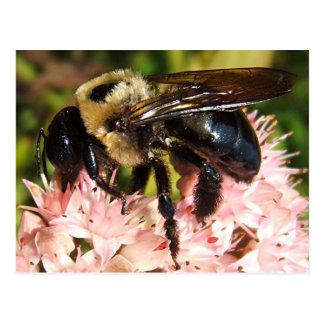 Big Bee 93 ~ postcard