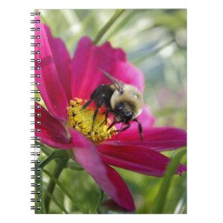Big Bee Eyes Note Books