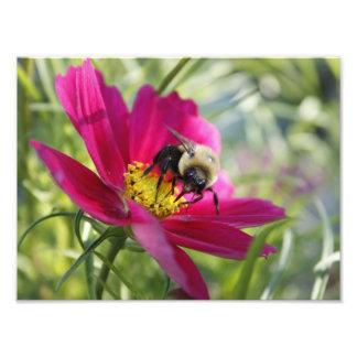 Big Bee Eyes Photo Print