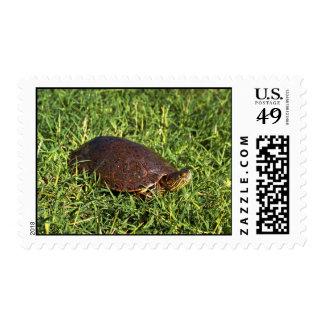 Big Bend Slider Postage Stamp