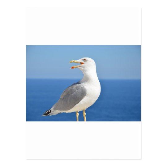 BIG BIRD POSTCARD