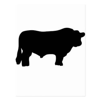 big black angus bull postcard