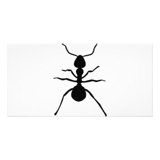 big black ant icon photo card