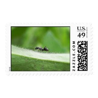 Big Black Ant Postage Stamp
