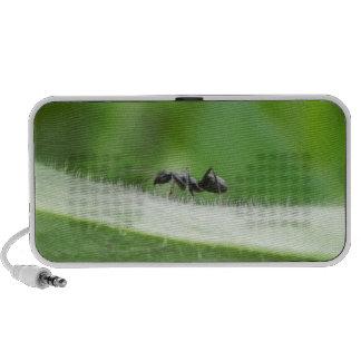 Big Black Ant iPod Speaker