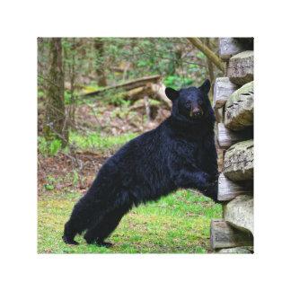 Big Black Bear in the Smoky's Canvas Print