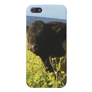 Big Black Bull in Sunflowers - Toro - Taurus iPhone 5 Covers