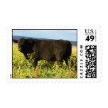 Big Black Bull in Wildflowers - Toro - Taurus Postage