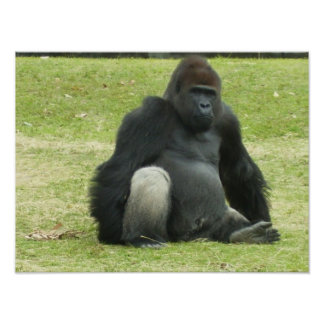 Big Black Gorilla Poster