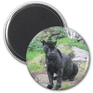 Big Black Jaguar Cat on Sitting on Rock 2 Inch Round Magnet