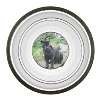 Big Black Jaguar Cat on Sitting on Rock Bowl