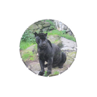Big Black Jaguar Cat on Sitting on Rock Jelly Belly Candy Tin