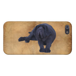 Case Savvy iPhone 5 Matte Finish Case with Newfoundland Phone Cases design