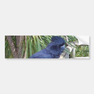 Big_Black_Parrot. Car Bumper Sticker