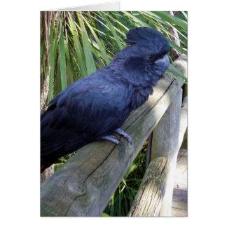 Big_Black_Parrot. Greeting Card
