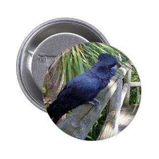 Big_Black_Parrot. Pinback Button
