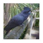 Big_Black_Parrot. Small Square Tile