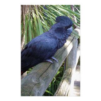 Big_Black_Parrot. Stationery