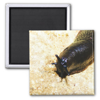 Big Black Slug 2 Inch Square Magnet
