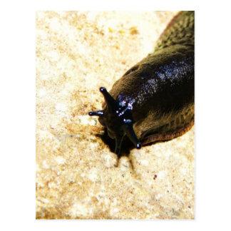 Big Black Slug Postcard