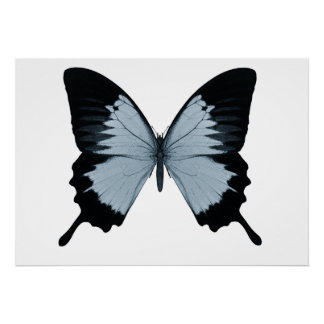 Big Blue & Black Butterfly Poster