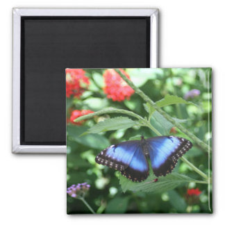 Big Blue Butterfly 2 2 Inch Square Magnet