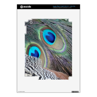 Big Blue Eyes Of A Peacock Feather iPad 3 Decal