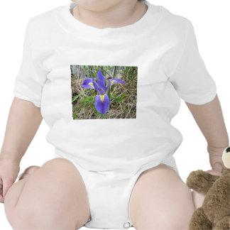 Big Blue Louisiana Iris Baby Creeper