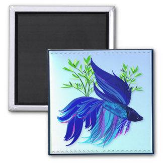 Big Blue Siamese Fighting Fish Magnets