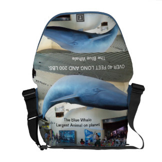 Big Blue Whale of the Pacific Messenger Bag