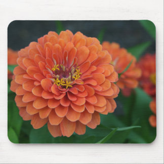 Big Bold Zinnia Flower Mousepad