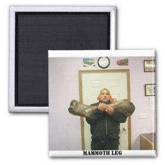 big bone, mammoth leg 2 inch square magnet