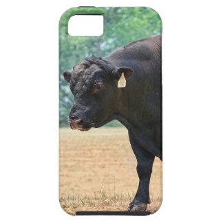 Big Boy Black Anqus Bull iPhone 5 Covers