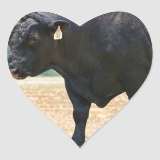 Big Boy Black Anqus Bull Heart Sticker