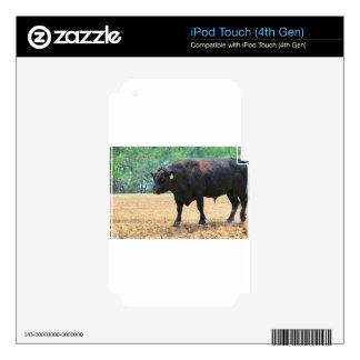 Big Boy Black Anqus Bull iPod Touch 4G Skins