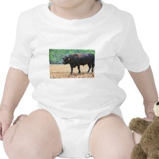 Big Boy Black Anqus Bull Creeper